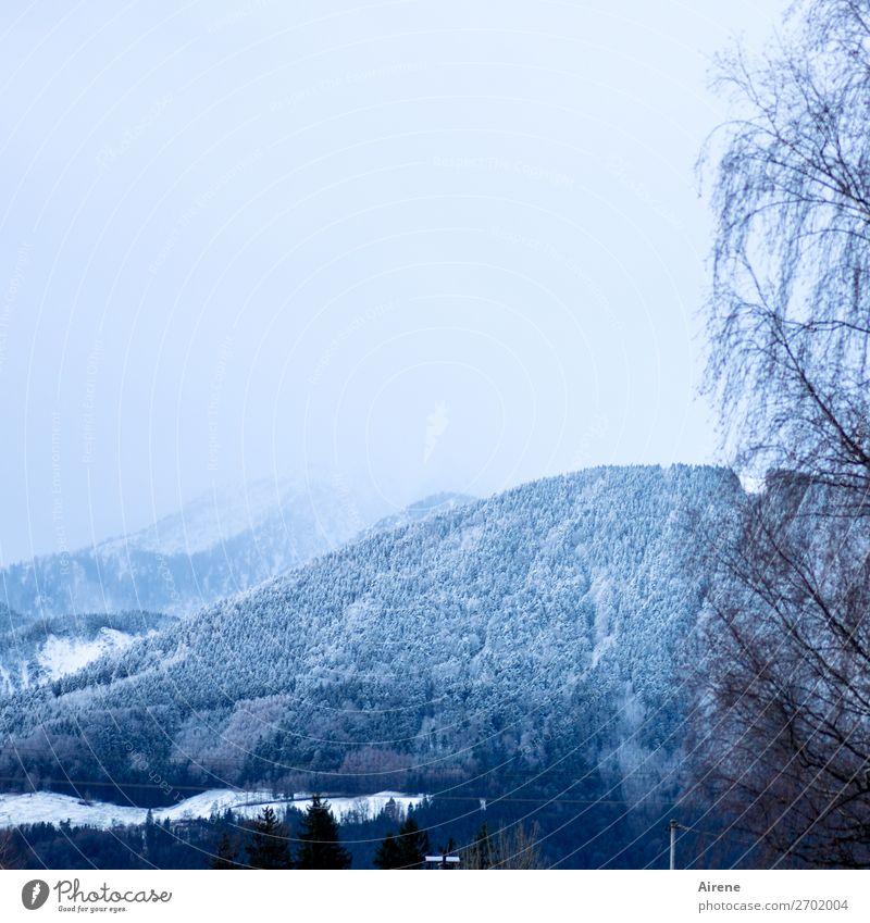 in höheren Lagen Schnee Landschaft Himmel Winter Baum Wald Hügel Alpen Berge u. Gebirge Alpenvorland Bergwald hell blau weiß ruhig Leichtigkeit Natur Landleben