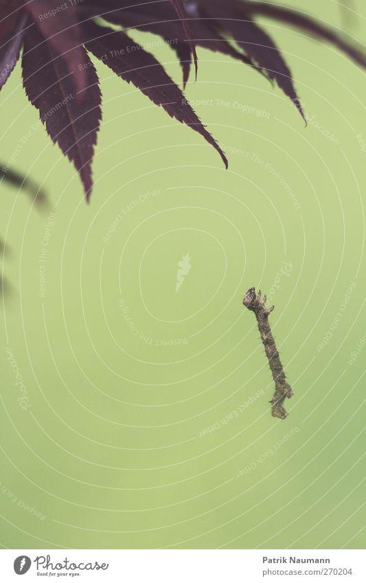 Cliffhanger Natur grün Tier Umwelt klein Garten springen Park Kraft fliegen bedrohlich festhalten fallen Unendlichkeit hängen exotisch