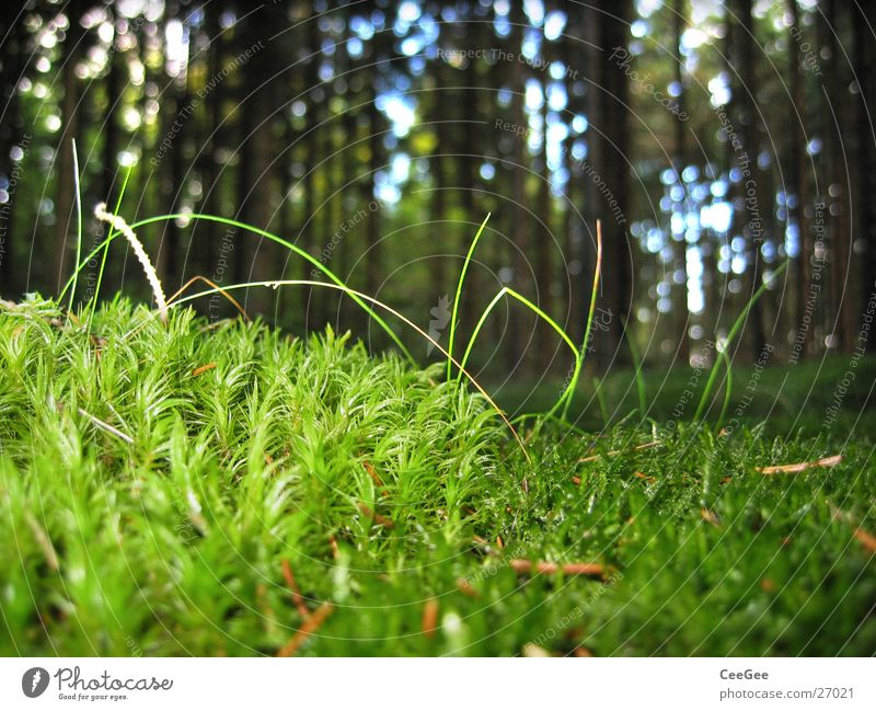 Waldboden 2 Baum grün Baumkrone Pflanze Gras Bodenbelag Makroaufnahme Nahaufnahme