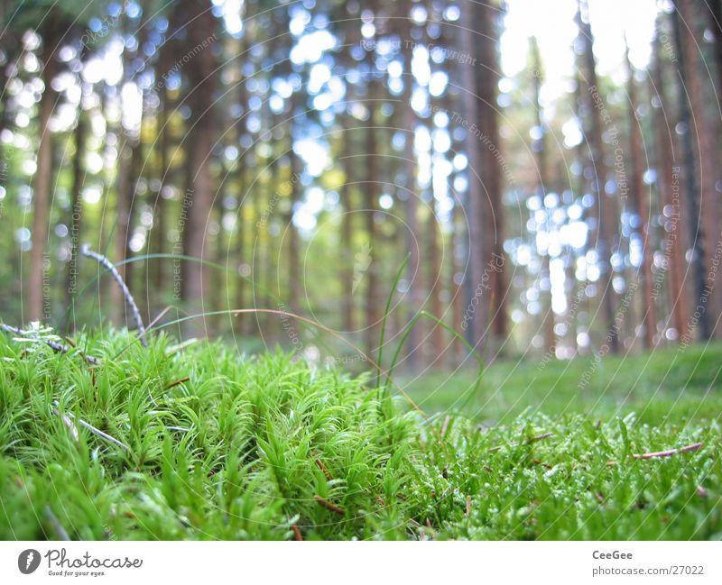 Waldboden Baum grün Pflanze Gras Bodenbelag Baumkrone Makroaufnahme