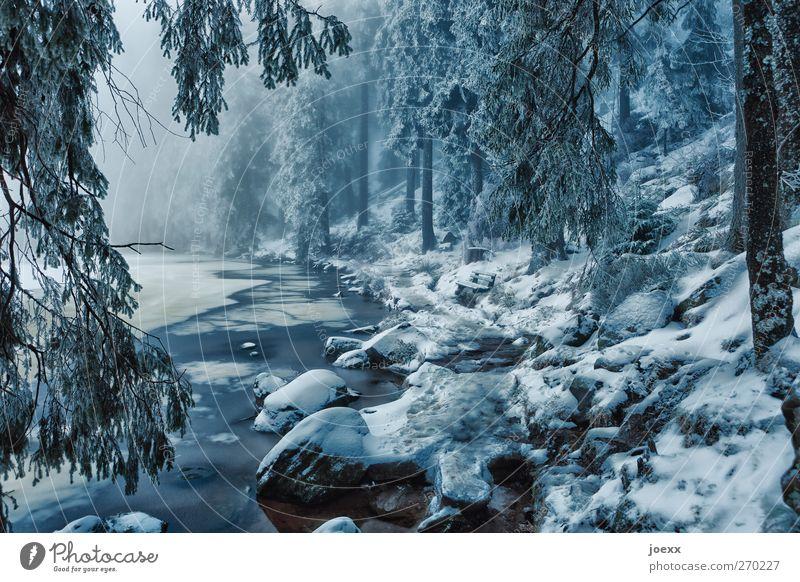 Märchen Natur blau weiß Winter schwarz Wald kalt Schnee Eis Nebel Klima Frost Idylle Seeufer fantastisch schlechtes Wetter