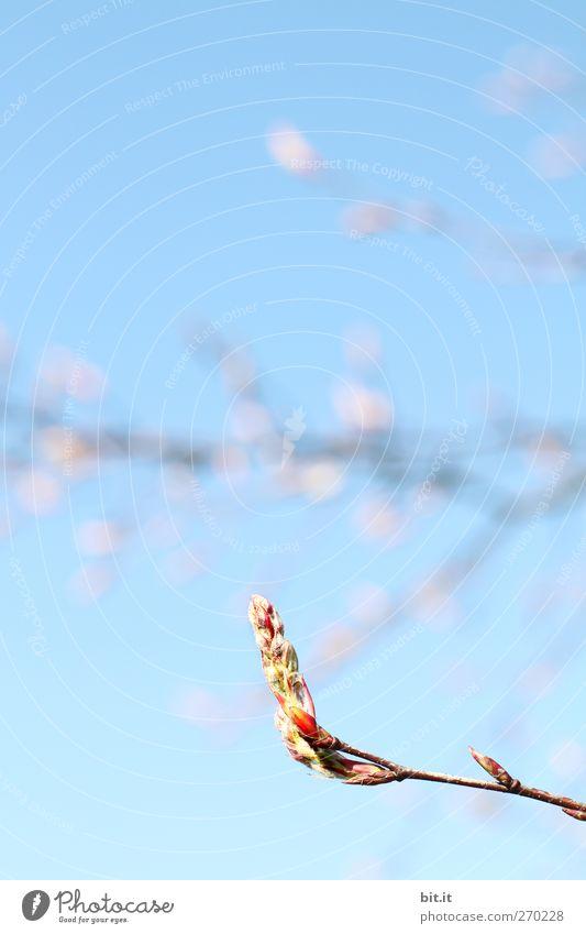 ignoriert den Regen... Natur blau Pflanze Baum Frühling Blüte Feste & Feiern Garten oben leuchten Dekoration & Verzierung frisch Geburtstag Klima Blühend Schönes Wetter