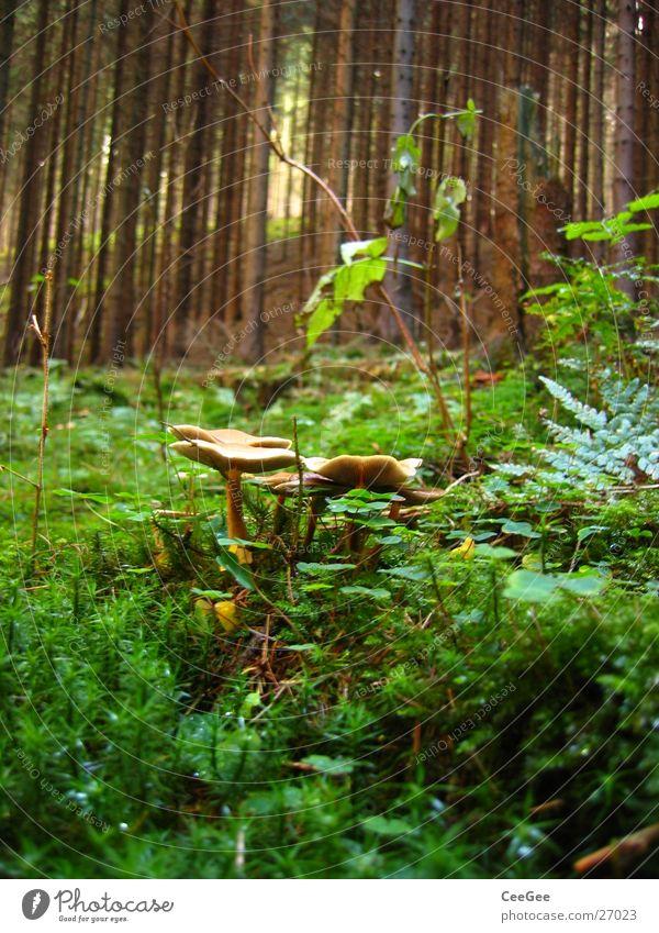 im Wald Waldboden Stock Herbst Baum grün Pflanze Pilz Gestrüp Baumstamm Natur Moos