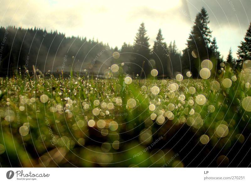 Taufrischer Tag Natur Landschaft Wassertropfen Frühling Nebel Baum Wiese Wald leuchten nass Gefühle Schwäche Freude Ferne mehrfarbig Außenaufnahme