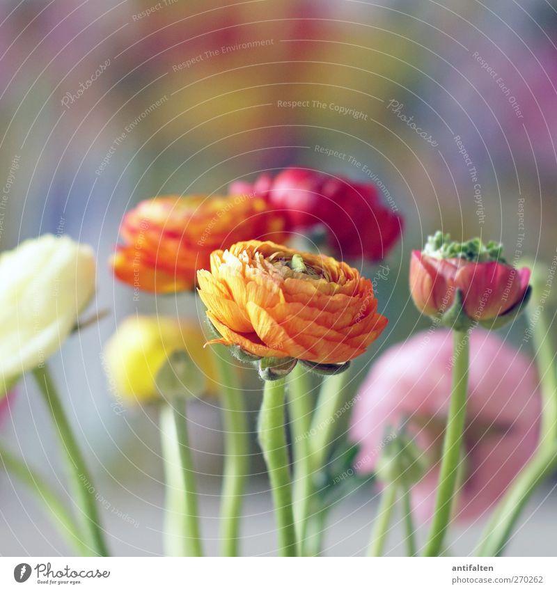 Schön bunt Pflanze schön Farbe Sommer Blume rot Blatt Freude gelb Blüte Frühling rosa orange Dekoration & Verzierung Fröhlichkeit ästhetisch