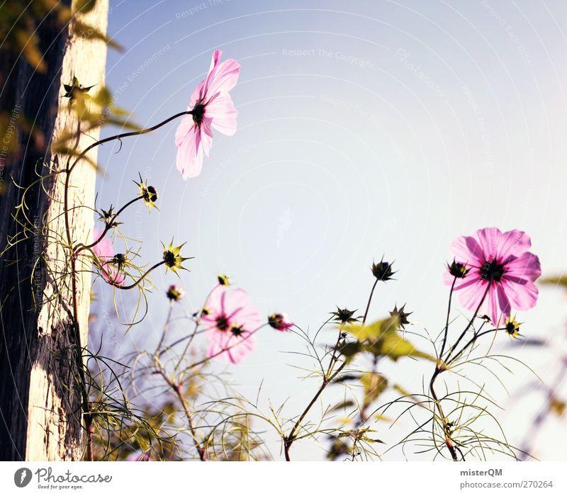 Gen Himmel. Umwelt Natur Landschaft Pflanze ästhetisch Zufriedenheit Blume Blumenwiese Blumenstengel Blumenbeet Blumenkasten Idylle friedlich Schönes Wetter