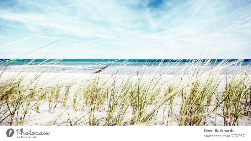 ein Tag am Meer Umwelt Natur Landschaft Pflanze Urelemente Sand Luft Wasser Himmel Wolken Horizont Frühling Sommer Klima Klimawandel Wetter Schönes Wetter Wind