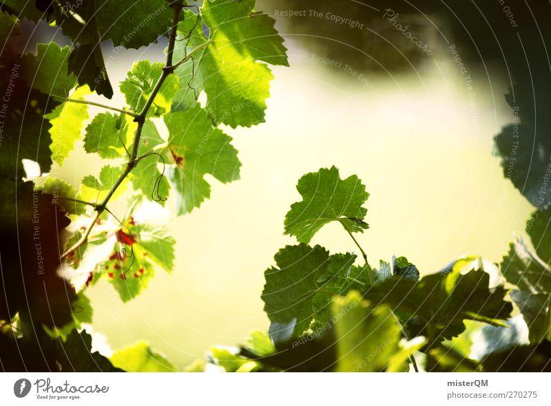 Rebblick. Umwelt Natur Landschaft Pflanze ästhetisch Wein Weinberg Weintrauben Weinlese Weinbau Italien Weinsorten grün reif Farbfoto Gedeckte Farben