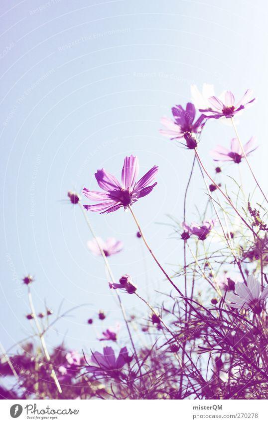 the purple ones. Umwelt Natur ästhetisch Blume Blumenwiese Blumenstengel Blumenladen violett Idylle Wiesenblume Farbfoto Gedeckte Farben Außenaufnahme
