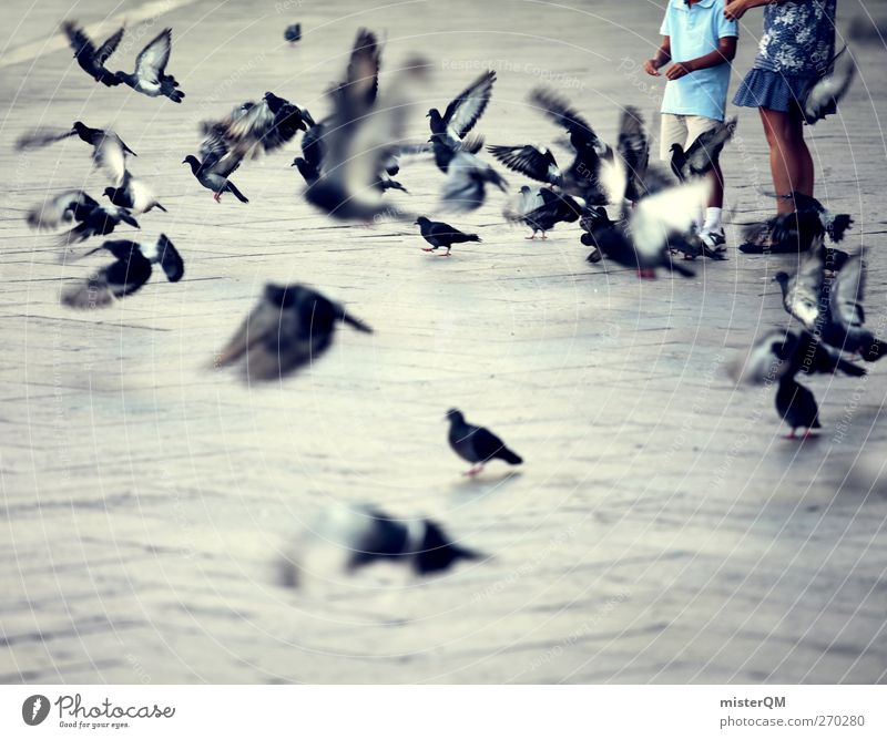 Venetian Kids. Kunst ästhetisch Venedig Veneto Italien Italienisch Taube Markusplatz Luftverkehr Schwarm fliegen Fernweh Idylle friedlich Farbfoto