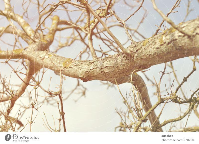 Äste Umwelt Natur Luft Himmel Sonnenlicht Frühling Winter Klima Schönes Wetter Dürre Baum Holz Hoffnung Umweltschutz kahl Ast Zweige u. Äste verzweigt