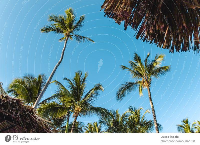 Bavaro Strände in Punta Cana, Dominikanische Republik Erholung Spa Ferien & Urlaub & Reisen Tourismus Sommer Strand Meer Insel Umwelt Natur Sand Baum Blatt