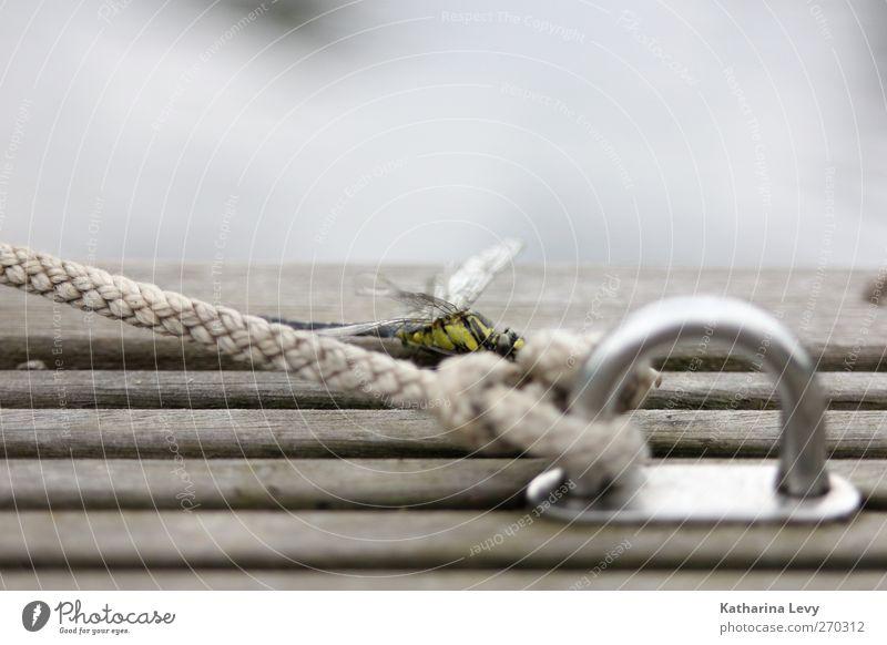 Libellensteg Natur Wasser Tier Einsamkeit gelb Holz grau klein See fliegen Wildtier elegant authentisch Seil trist Flügel