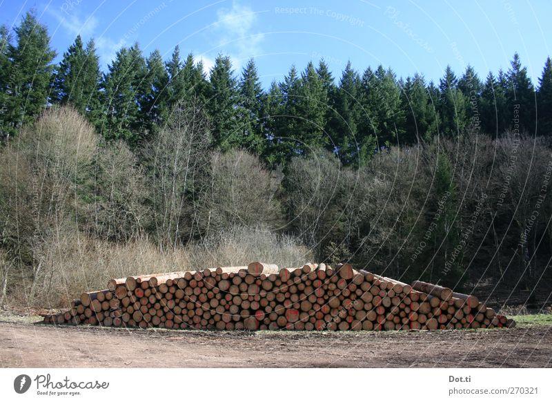 Forstwirtschaftsmeisterprüfung Himmel Natur Baum Wald Holz Wege & Pfade Ordnung Schilder & Markierungen Baumstamm Forstwirtschaft Haufen Waldlichtung Holzstapel