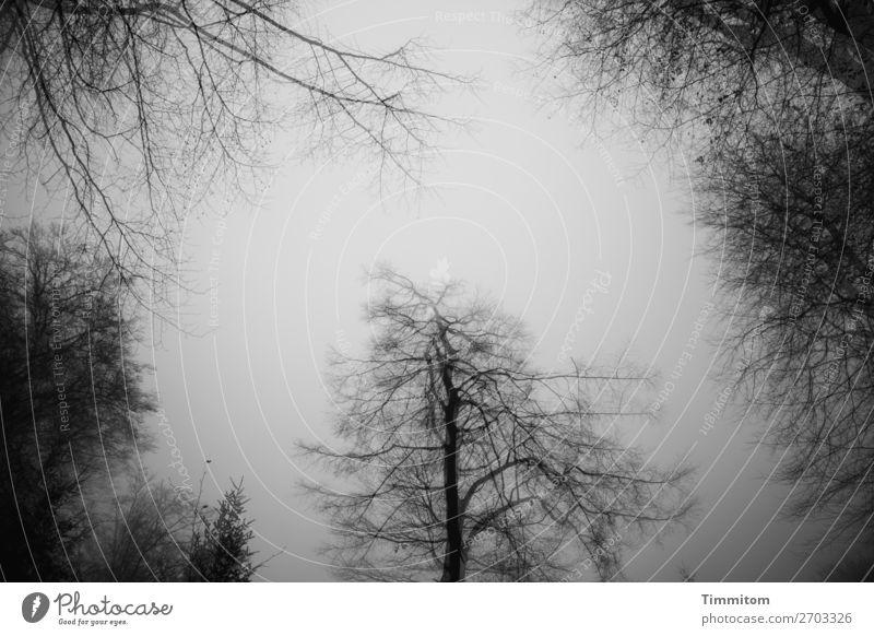 Nebel im Wald Umwelt Natur Pflanze Himmel Winter Baum dunkel natürlich grau schwarz weiß Gefühle Doppelbelichtung Schwarzweißfoto Außenaufnahme Menschenleer Tag