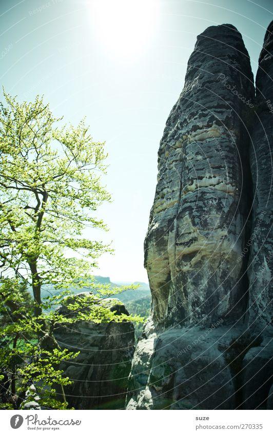 Hochachtungsvoll Freiheit Berge u. Gebirge Umwelt Natur Landschaft Pflanze Himmel Wolkenloser Himmel Frühling Klima Schönes Wetter Baum Felsen authentisch groß