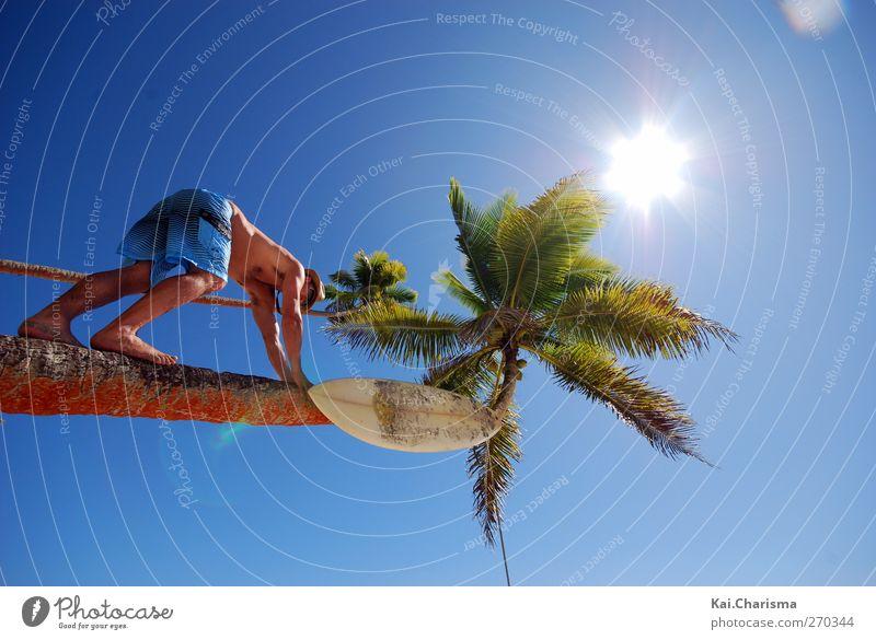 Palm Tree and Surfer Dude Mensch Mann Jugendliche Baum Sonne Sommer Erwachsene Leben Freiheit Junger Mann maskulin 18-30 Jahre Lifestyle einzeln Schönes Wetter