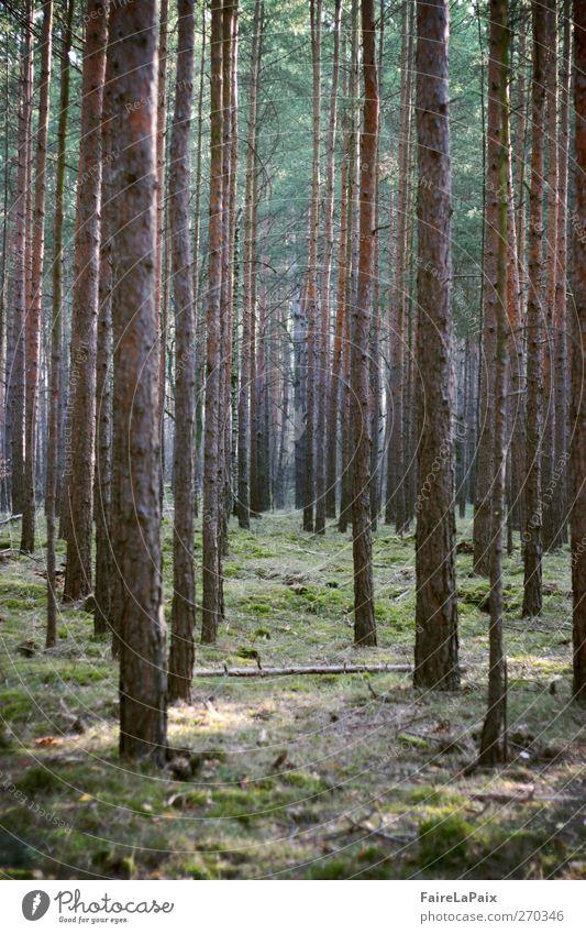 Unendlich Natur Pflanze Frühling Schönes Wetter Baum Wald genießen authentisch braun grün Gelassenheit geduldig ruhig Einsamkeit Erholung Frieden Idylle