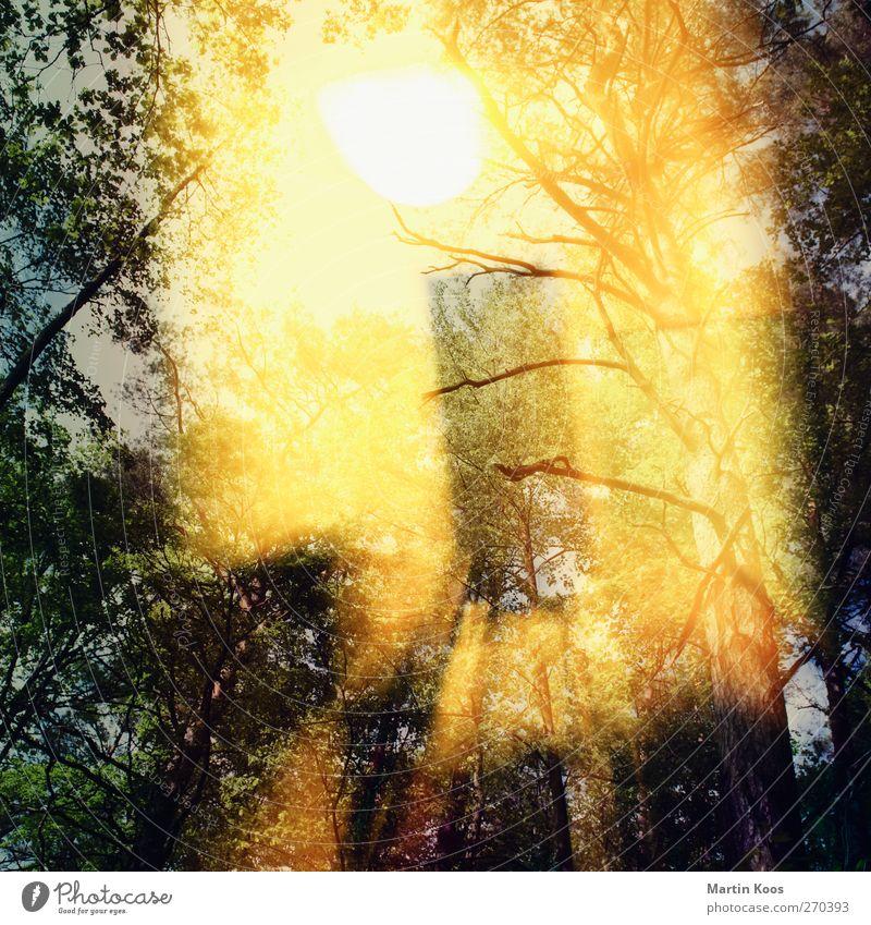 drinnen/draußen Himmel Natur Baum Sonne Wald gelb Wärme Bewegung Lampe Raum gold glänzend wild Geschwindigkeit ästhetisch Doppelbelichtung