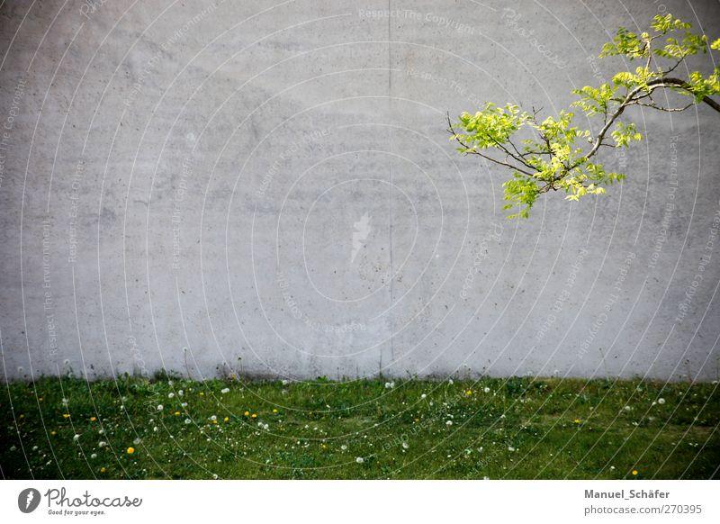 enter the copyspace Pflanze Frühling Baum Gras Wiese Stadt Menschenleer Haus Fabrik Architektur Mauer Wand Beton einfach grau grün Einsamkeit Freiraum