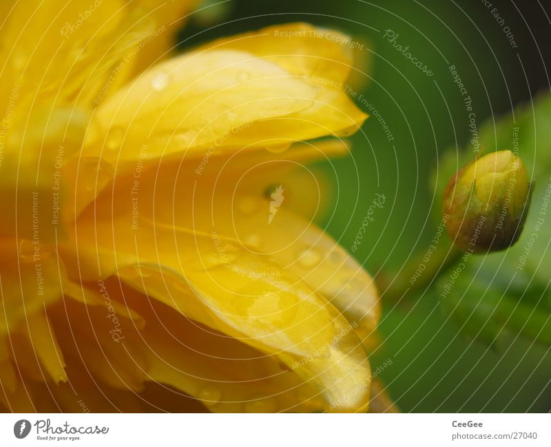 gelbgrün Natur Blume Pflanze Blatt Blüte Stempel Blütenblatt