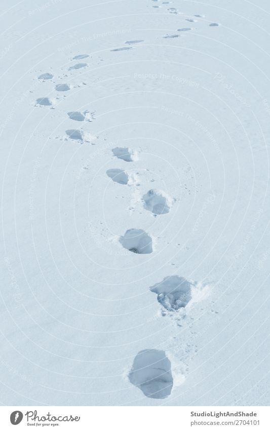Fußspuren im Schnee Winter Mensch Natur Wege & Pfade Fährte frisch natürlich weiß Fußstapfen Spur Spuren Bahn tief kalt Hintergrund Konsistenz Feld Spaziergang