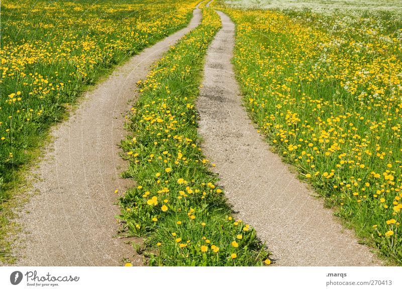 Landweg Umwelt Natur Landschaft Sommer Schönes Wetter Blume Löwenzahnfeld Wiese Verkehr Verkehrswege Straße Wege & Pfade Zeichen Blühend Unendlichkeit schön