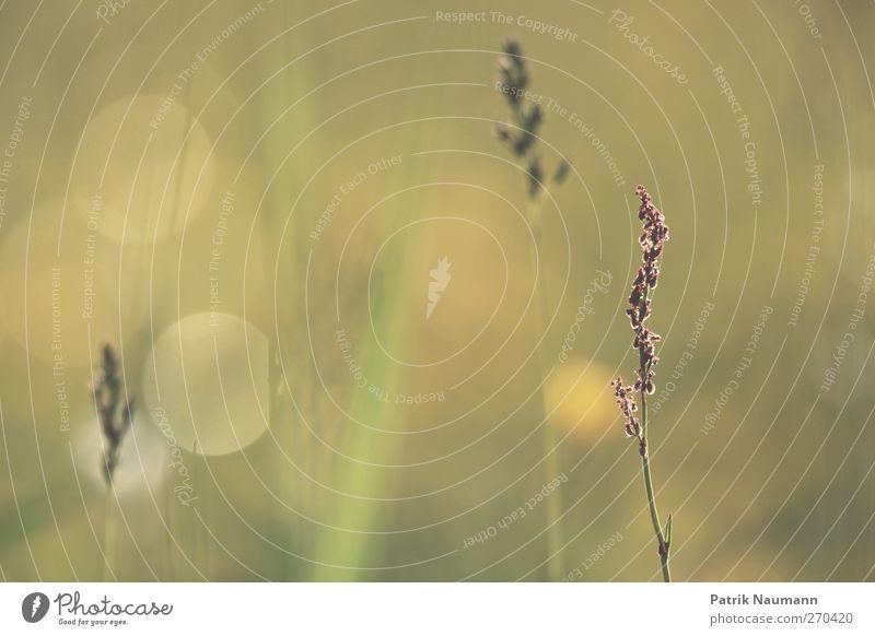 summertime Natur grün schön Pflanze Sommer Tier Einsamkeit Erholung Ferne Landschaft Wiese Gefühle Gras Frühling gold elegant