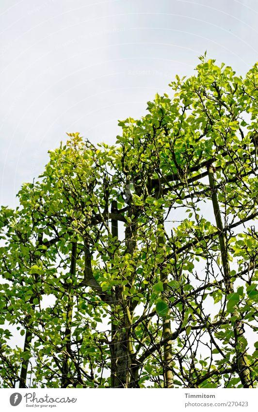 Traum/Alptraum Umwelt Natur Pflanze Himmel Frühling Baum Park Heidelberg Stadtrand Holz Wachstum grün schwarz Gefühle Unterdrückung Verbote Wuchshilfe Vorgabe