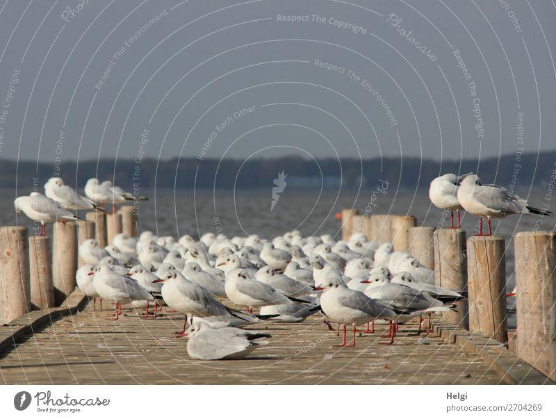Siesta Natur Sommer blau weiß Landschaft Erholung Tier ruhig Holz Leben Umwelt natürlich See Vogel braun grau