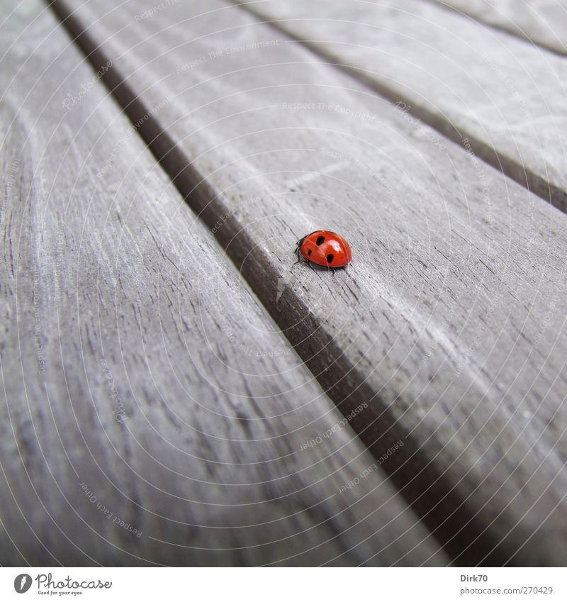 Wie weit ist der Weg ... schön rot Tier Einsamkeit schwarz Ferne Umwelt Frühling Holz grau Garten Tisch Perspektive niedlich Ziel diagonal