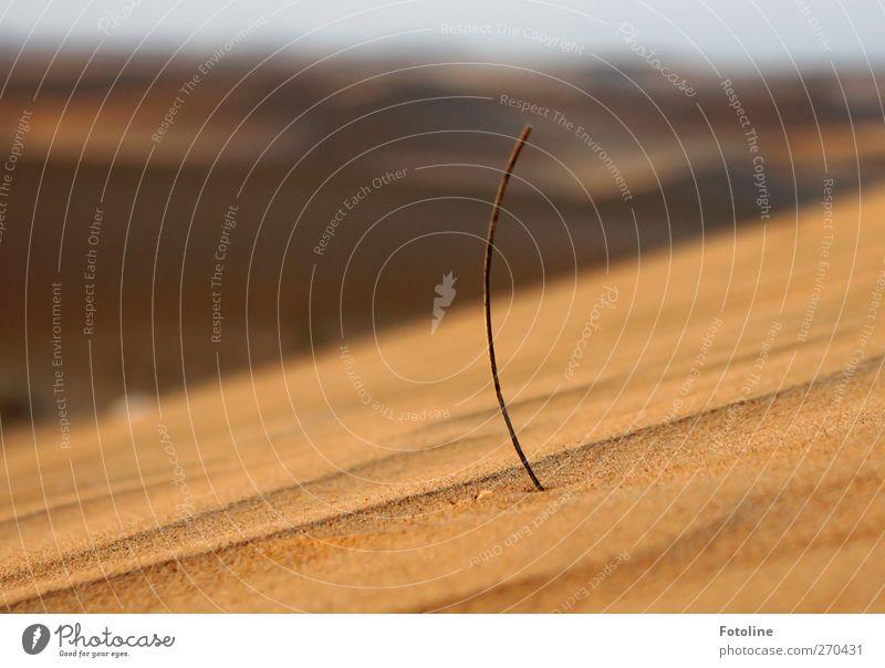 Überlebenskünstler Umwelt Natur Pflanze Wärme Gras Wüste heiß hell natürlich Sand Wüstenpflanze Wachstum Farbfoto mehrfarbig Außenaufnahme Nahaufnahme Tag Licht