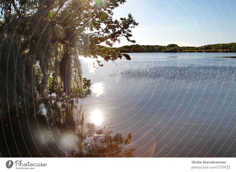 Alligator's Paradise Umwelt Natur Landschaft Pflanze Tier Wasser Frühling Schönes Wetter Baum Sträucher Moos Urwald Seeufer Moor Sumpf Teich Everglades NP