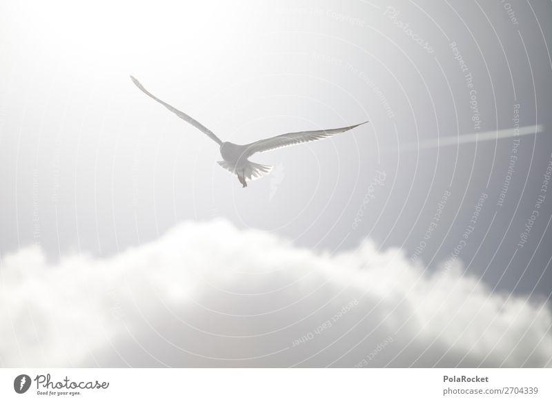 #AS# High White Kunst Kunstwerk ästhetisch fliegen Vogel Vogelperspektive Vogelflug Möwe Möwenvögel fliegend Leichtigkeit hell Sommer Sonne Küste Tier Farbfoto