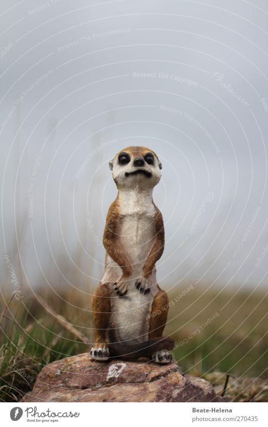 Wasnhierlos? Tier Erdmännchen 1 atmen beobachten Wachstum warten außergewöhnlich Freundlichkeit Neugier niedlich schön blau braun grün weiß Gefühle selbstbewußt