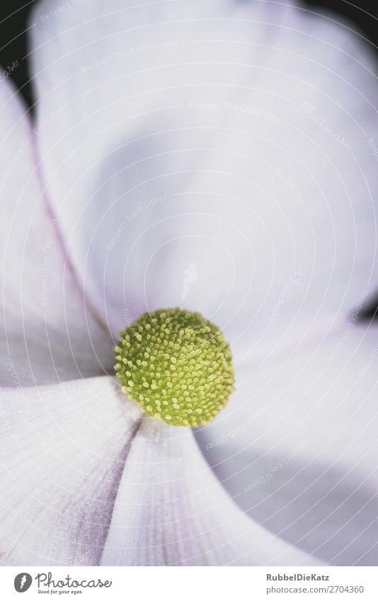 grüne Murmel Natur Pflanze weiß Blume Blatt ruhig schwarz Umwelt Blüte natürlich außergewöhnlich Design Wachstum elegant Kraft