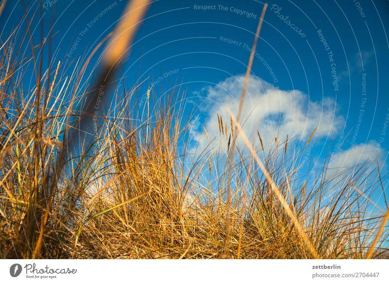 Düne Vorpommersche Boddenlandschaft Deutschland Ferien & Urlaub & Reisen Herbst Küste Mecklenburg-Vorpommern Meer mönchgut Nebensaison Natur Ostsee Rügen Strand