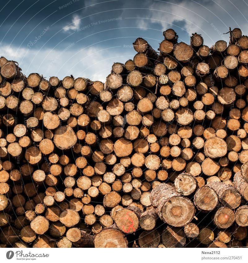 Wintervorrat Landwirtschaft Forstwirtschaft Himmel Wolken Gewitterwolken Baum Holz dunkel rund trocken viele braun Stapel Holzstapel Lager hoch Mengenzählwerk