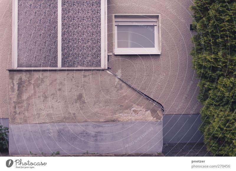 Nachbarschaft I alt Stadt Baum Pflanze Haus Fenster Straße kalt Wand Architektur Mauer Gebäude Tür Treppe Armut Beton