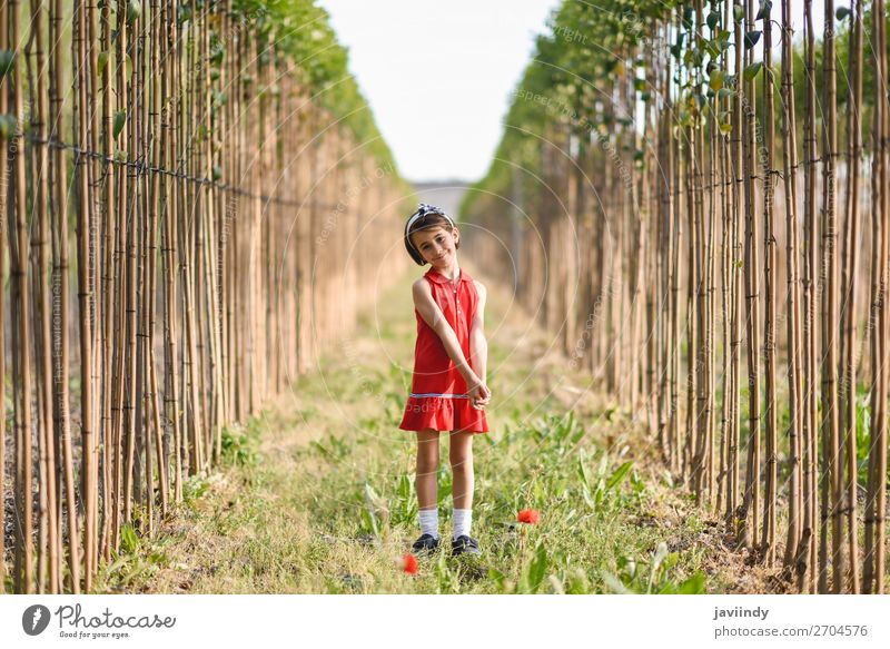Kleines Mädchen, das auf einem Feld in der Natur spazieren geht und ein schönes Kleid trägt. Lifestyle Freude Glück Spielen Sommer Kind Mensch feminin Frau