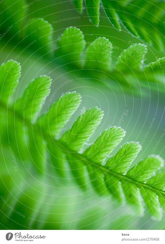 fa(r)ntastisch Natur blau weiß grün schön Pflanze Sommer Blatt Frühling Linie Wind natürlich frisch authentisch Wachstum Netzwerk