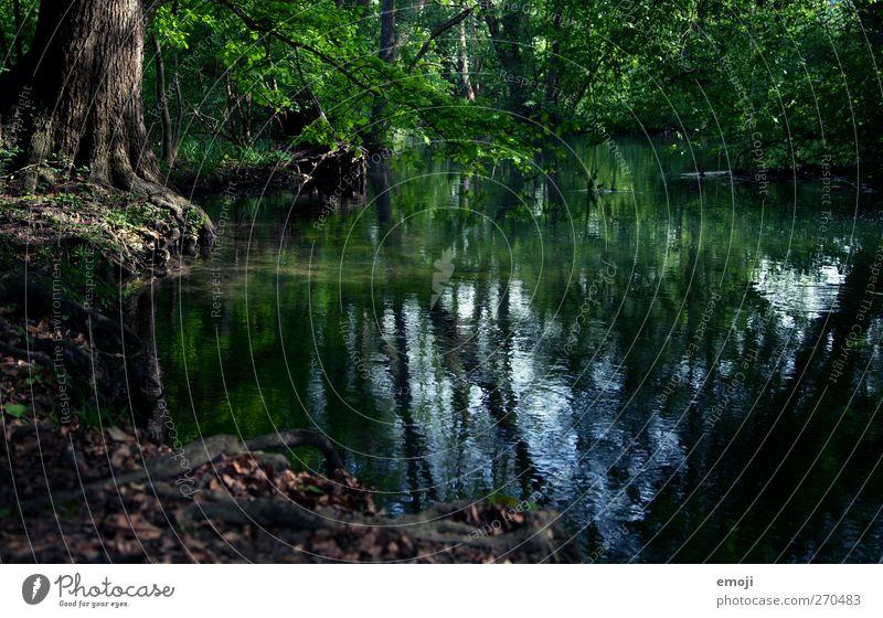 Märchenwasser Umwelt Natur Wasser Frühling Pflanze Baum Sträucher Park Teich Bach dunkel natürlich grün Märchenwald Märchenlandschaft geheimnisvoll Farbfoto