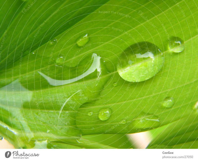 Tropfen Pflanze Blume grün nass feucht Blatt Makroaufnahme Nahaufnahme Regen Wassertropfen Natur