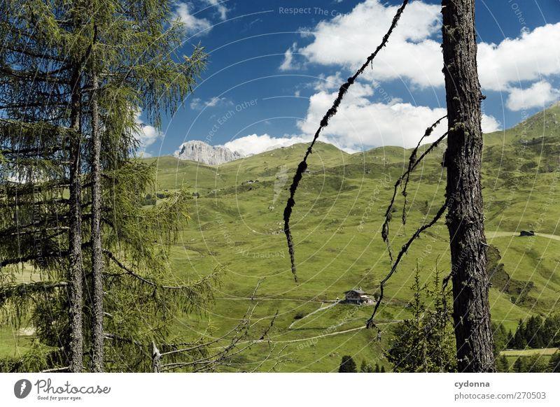 Dem Himmel so nah Natur Ferien & Urlaub & Reisen Baum Sommer Wolken ruhig Erholung Ferne Umwelt Landschaft Wiese Berge u. Gebirge Freiheit Wege & Pfade träumen