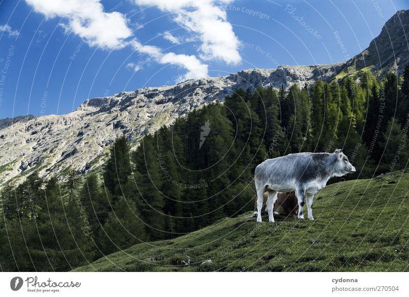 Seiser Alm harmonisch ruhig Ferien & Urlaub & Reisen Tourismus Ferne Freiheit Umwelt Natur Landschaft Himmel Sommer Wiese Wald Alpen Berge u. Gebirge Nutztier