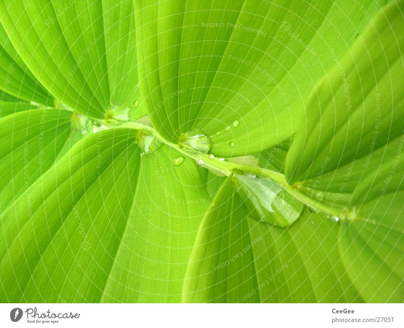 Wasser im Grünen 4 Natur Wasser Blume grün Pflanze Blatt Regen Wassertropfen nass Treppe feucht Zweig
