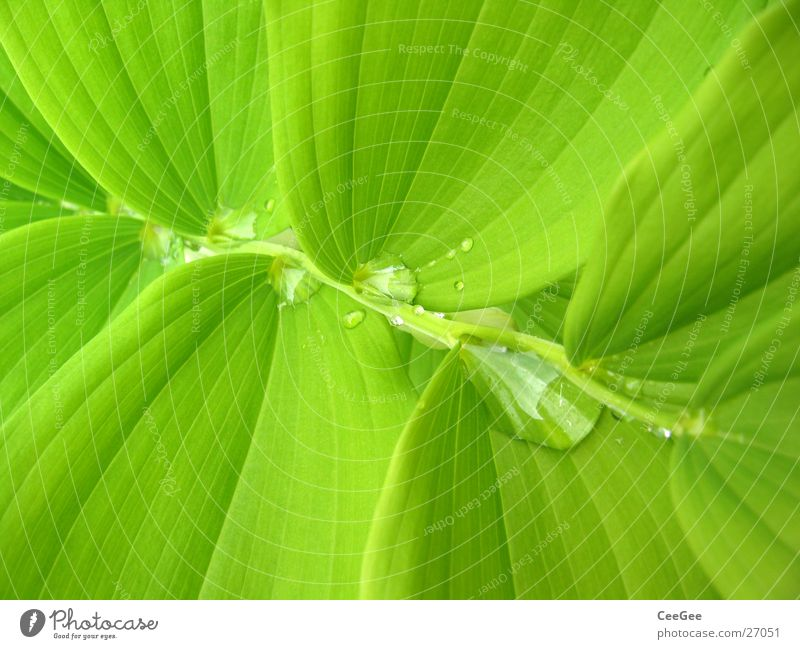 Wasser im Grünen 4 Pflanze Blume grün nass feucht Blatt Makroaufnahme Nahaufnahme Regen Wassertropfen Natur Zweig Treppe