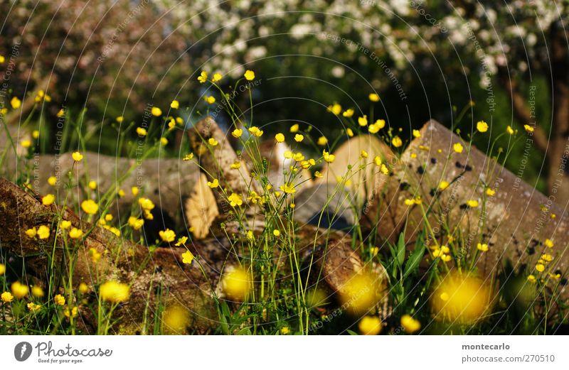 "Ich nehme ""Natur"" (100) Herr Thoelke... Umwelt Landschaft Pflanze Sonne Sonnenlicht Frühling Schönes Wetter Baum Blume Gras Sträucher Blatt Blüte Grünpflanze"