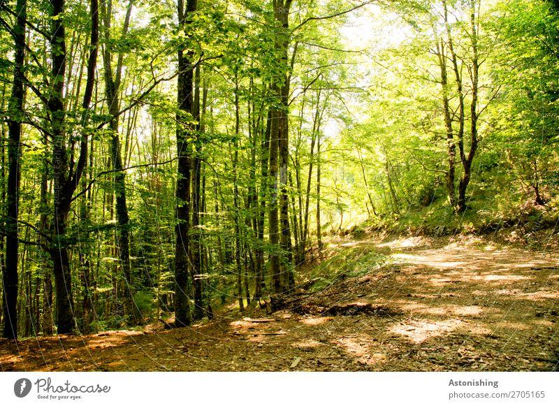 in der Kurve Umwelt Natur Landschaft Pflanze Sommer Wetter Schönes Wetter Baum Wald Albanien Wege & Pfade hell gelb grün Baumstamm Blätterdach Blatt Boden Ast