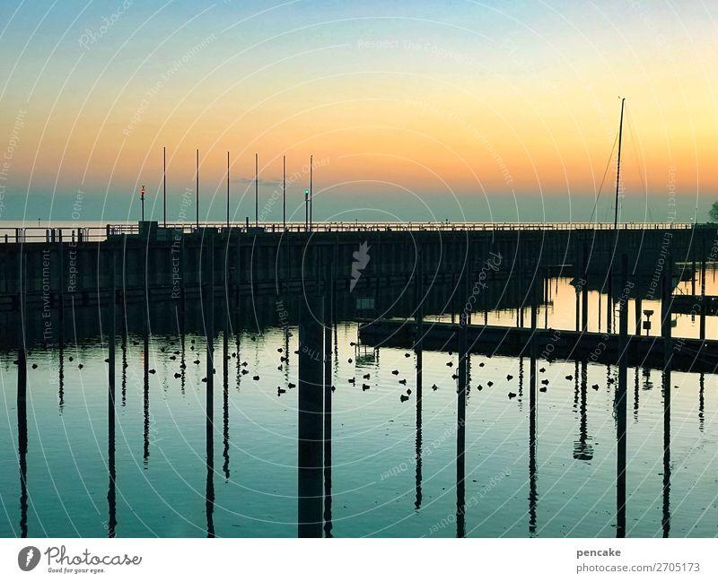 ruhiger hafen Natur Landschaft Urelemente Wasser Himmel Winter Schönes Wetter Küste See Hafen Wildtier Vogel Schwarm kalt maritim schön Bodensee ruhen Farbfoto
